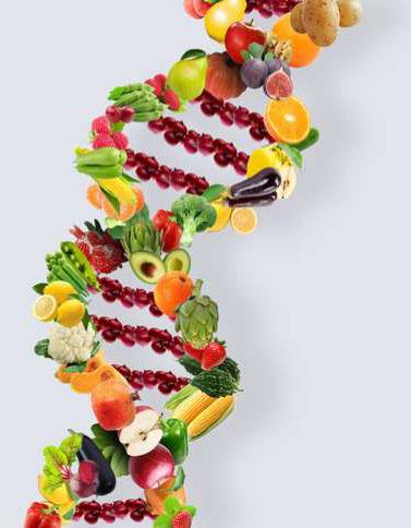 Su dieta y ADN