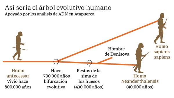 ARBOL-EVOLUTIVO