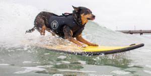 Dog-Surf16