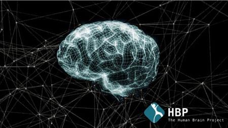 El Proyecto Cerebro Humano