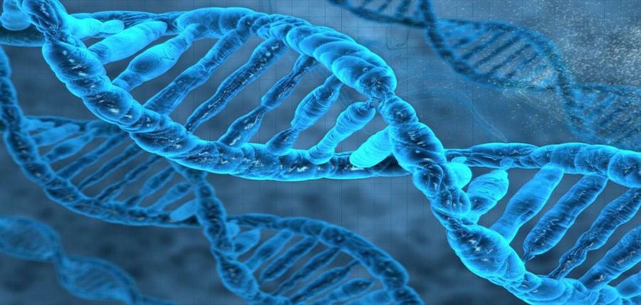el ADN y su dieta