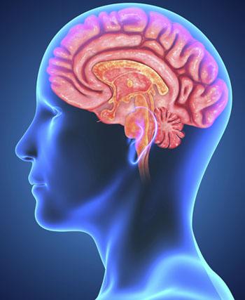 Barrera cerebral
