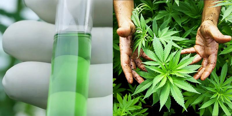 FCM Global: licencia para cannabis con fines medicinales en Colombia