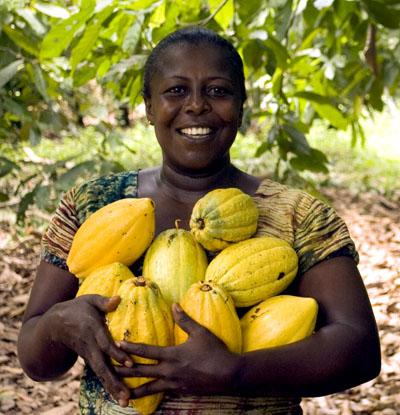 El fruto de cacao