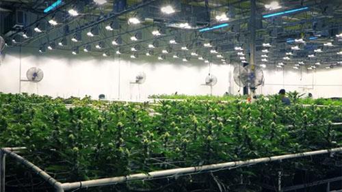 Plantación bajo techo