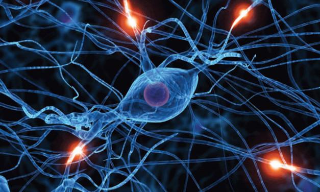 Gen que ayuda a prevenir la enfermedad cerebral